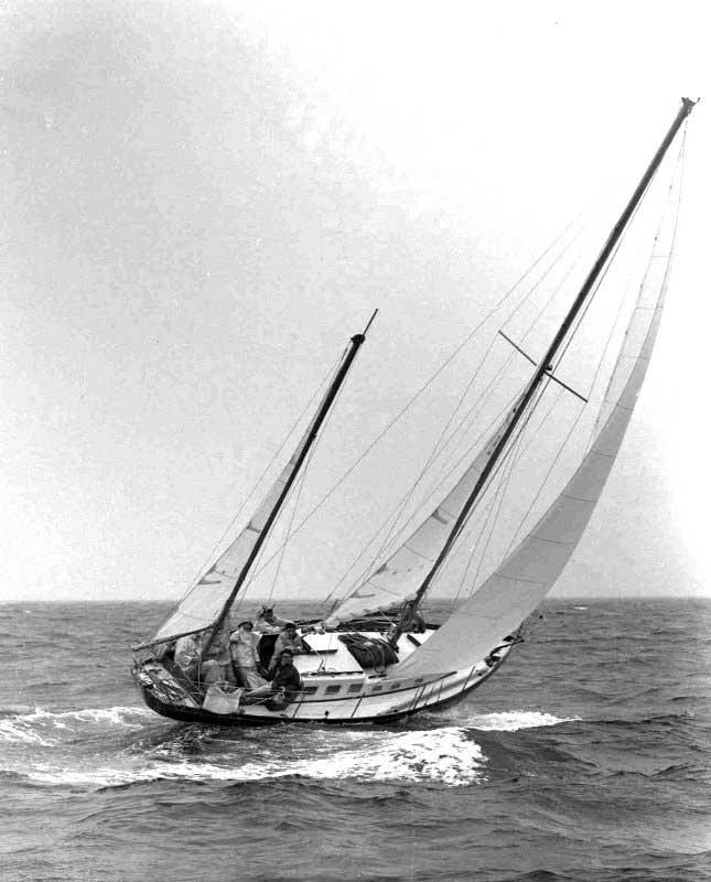 Casarca IV